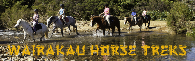 Wairakau Horse Treks and Pony Riding Whitianga